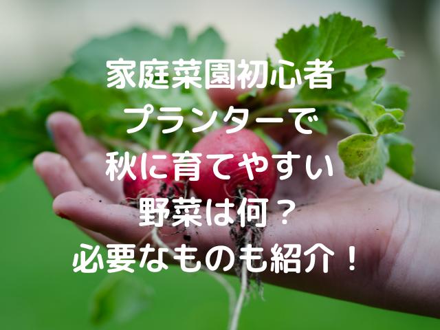 家庭菜園初心者プランターで秋に育てやすい野菜は何?育てるのに必要なものも紹介!